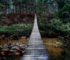 Cầu treo nguy hiểm nhất Đà Lạt có view cực chill không dành cho người yếu tim