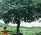 Nghỉ dưỡng quanh Hà Nội đắt khách vì nhu cầu tăng cao