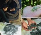 Điện Biên: Trải nghiệm hái chè Shan tuyết ở Sín Chải