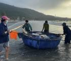 Đà Nẵng: Ngư dân ra khơi sau bão