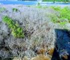 Rừng ngập mặn Rú Chá