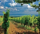 Tokaj: Vùng đất thanh bình, ngọt ngào