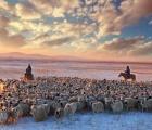 Cuộc sống trên thảo nguyên -30 độ, người và gia súc quây quần sưởi ấm