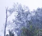 Rét đậm trở lại từ ngày 17/1, đề phòng băng giá, mưa tuyết vùng núi cao