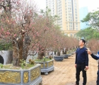 """Nhiều loại hoa, cây cảnh giá """"khủng"""" khoe sắc trên đường phố Hà Nội"""