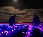 Nông trại Hà Lan biến thành xứ sở thần tiên tuyệt đẹp về đêm