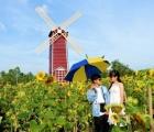 Vườn hoa hướng dương lớn nhất TP Sa Đéc mê hoặc người dân miền Tây