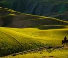 Cận cảnh đồng cỏ được ví như 'tấm lưng trần của thiếu nữ' ở Trung Quốc