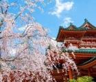 10 địa điểm ngắm hoa nổi tiếng ở Nhật Bản nhất định phải ghé thăm
