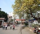 'Bảo vật' làng Đình Thôn tỏa hương khoe sắc