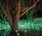 Cánh đồng ánh sáng huyền ảo tại California
