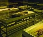 Kỹ thuật ướp xác cổ đại 7000 năm của Chile được đưa vào danh sách Di sản thế giới