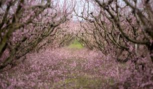 Mùa hoa Bún nở rộ bên dòng Kiến Giang
