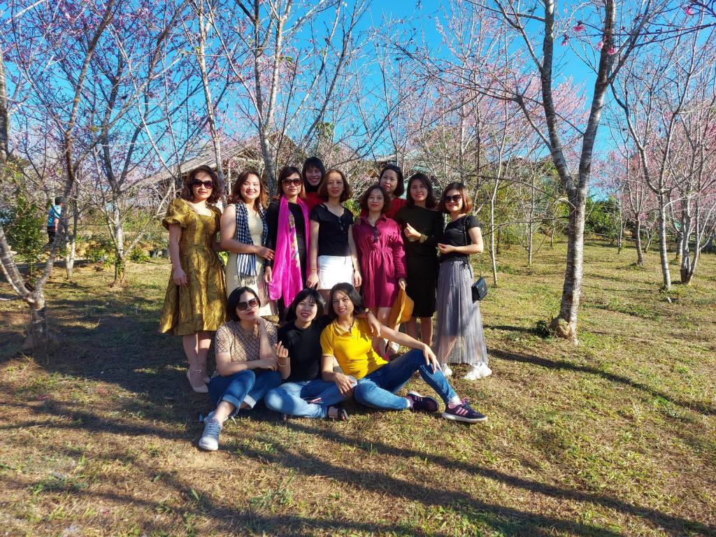 Điện Biên: Hơn 1.500 cây hoa Anh Đào Sakura, Nhật Bản đang bung mình khoe sắc trên đảo Pá Khoang  - Ảnh 1.