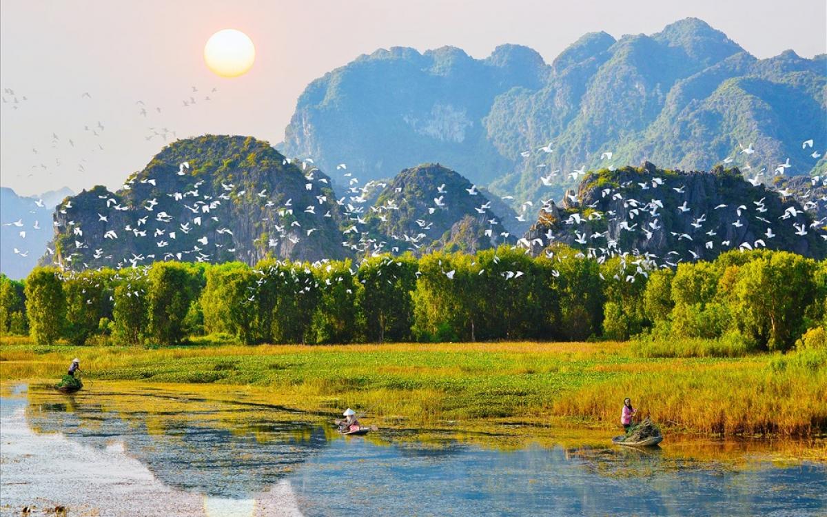 """Khám phá những """"đảo cò"""" độc đáo có 102 ở Ninh Bình - Kênh truyền hình Đài  Tiếng nói Việt Nam - VOVTV"""