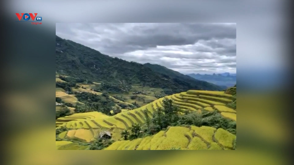 Hà Giang: Khám phá ruộng bậc thang qua tour du lịch online