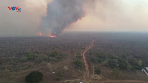 Bolivia: Cháy rừng thiêu rụi hơn 1,5 triệu ha đất