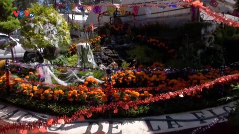Mexico: Nhu cầu hoa cúc vạn thọ tăng vọt trước Ngày của Người chết
