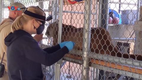Mỹ: Tiêm vaccine cho động vật trong vườn thú