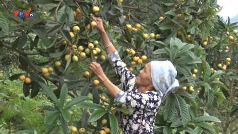 Trung Quốc: Du lịch tại các vườn cây ăn quả
